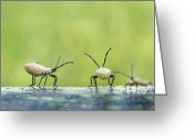 Nymphs Greeting Cards - Garden Variety Nymphs Greeting Card by Bill Pevlor