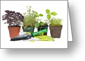 Garden Pots Greeting Cards - Gardening tools and plants Greeting Card by Elena Elisseeva