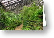 Greenhouse Greeting Cards - Garfield Park Conservatory Path Chicago Greeting Card by Steve Gadomski