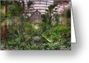 Conservatory Photo Greeting Cards - Garfield Park Conservatory Reflecting Pool Greeting Card by Steve Gadomski
