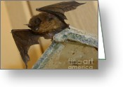 Nature Fusion Greeting Cards - Gargoyle Bat Greeting Card by Patrick Witz