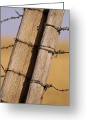 Barbed Wire Fences Photo Greeting Cards - Gate Posts Join A Barbed Wire Fence Greeting Card by Gordon Wiltsie