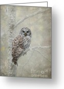Barred Owl Greeting Cards - Gaurdian of the Woods Greeting Card by Reflective Moments  Photography and Digital Art Images