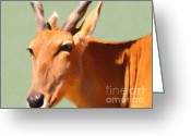 Safari Greeting Cards - Gazelle . 7D2018 Greeting Card by Wingsdomain Art and Photography