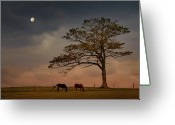 Two Animals Greeting Cards - Gazing Peacefully Greeting Card by Nancy Rose
