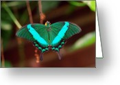 Fine Home Art And Theater Greeting Cards - Geen Blue Butterfly Greeting Card by Don  Wright