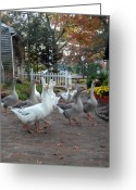 Spirit Hawk Art Greeting Cards - Geese 51 Greeting Card by Joyce StJames