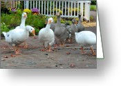Spirit Hawk Art Greeting Cards - Geese 56 Greeting Card by Joyce StJames