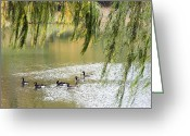 Central Park Photo Greeting Cards - Geese In Central Park Greeting Card by Stacy Gold