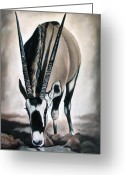 Ilse Kleyn Greeting Cards - Gemsbok - Thirst Greeting Card by Ilse Kleyn
