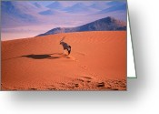 African Animals Greeting Cards - Gemsbok Greeting Card by Eric Hosking and Photo Researchers