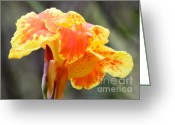 Florida Flowers Greeting Cards - Gentle Awakening Greeting Card by Carol Groenen