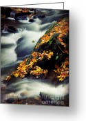 Liquid Greeting Cards - Gentle Grace Greeting Card by Darren Fisher