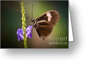 Insects Greeting Cards - Gentle Touch Greeting Card by Charles Dobbs