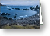 Pygoscelis Papua Greeting Cards - Gentoo And Chinstrap Penguins Look Greeting Card by Paul Nicklen