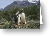 Sub Greeting Cards - Gentoo Penguin and Young Chicks Greeting Card by Suzi Eszterhas