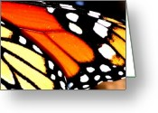 Monarchs Greeting Cards - Geometry Greeting Card by Emily Stauring