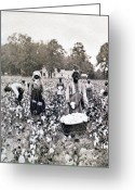 Picker Greeting Cards - Georgia Cotton Field - c 1898 Greeting Card by International  Images