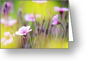 Square_format Greeting Cards - Geranium Greeting Card by Heiko Koehrer-Wagner