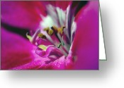 Johannessen Greeting Cards - Geranium Intimacy Greeting Card by Torfinn Johannessen