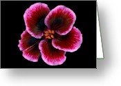 Garden Pyrography Greeting Cards - Geranium Greeting Card by Richard Wilhelm