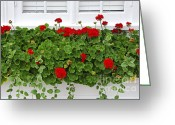 Summer Garden Greeting Cards - Geraniums on window Greeting Card by Elena Elisseeva