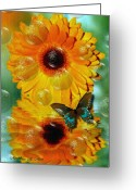Smudgeart Greeting Cards - Gerber Daisy Greeting Card by Madeline M Allen