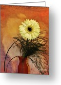 Orange Daisy Photo Greeting Cards - Gerber Daisy Still Life Greeting Card by Marsha Heiken