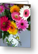 Gerber Greeting Cards - Gerbera Daisy Bouquet Greeting Card by Marilyn Hunt