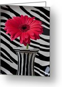Stripes Greeting Cards - Gerbera daisy in striped vase Greeting Card by Garry Gay