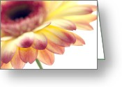 Gerber Greeting Cards - Gerbera Greeting Card by Rebecca Cozart