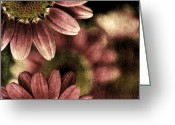 Sage Green Greeting Cards - Gerberas Greeting Card by Bonnie Bruno