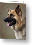 Panting Dog Greeting Cards - German Shepherd Dog Greeting Card by Ethiriel  Photography