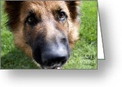 Sniff Greeting Cards - German Shepherd dog Greeting Card by Fabrizio Troiani