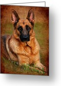 Dogs Digital Art Greeting Cards - German Shepherd Dog Portrait  Greeting Card by Angie McKenzie