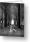 Devon Greeting Cards - German Shepherd Dog Sitting Down In Woods Greeting Card by Adam Hirons Photography
