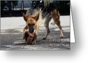 German Football Greeting Cards - German Shepherd Playing Greeting Card by Andre Goncalves