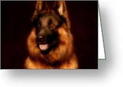 Alsatian Greeting Cards - German Shepherd Portrait Greeting Card by Sandy Keeton