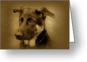Alsatian Greeting Cards - German Shepherd Pup Greeting Card by Sandy Keeton