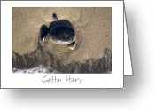 Beach Art Greeting Cards - Gettin Hairy Greeting Card by Peter Tellone