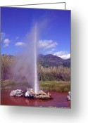 Geothermal Greeting Cards - Geyser Calistoga Greeting Card by Garry Gay