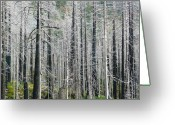 Ghostly Greeting Cards - Ghost Forest Greeting Card by Lori Seaman