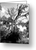 Ghostly Greeting Cards - Ghost Tree Greeting Card by David Lee Thompson