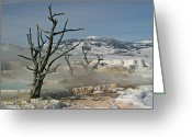 Mammoth. Greeting Cards - Ghost Trees Greeting Card by Katie LaSalle-Lowery