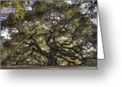 Angel Oak Tree Greeting Cards - Giant Angel Oak Tree Charleston SC Greeting Card by Dustin K Ryan