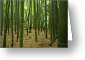 Bamboo Greeting Cards - Giant Bamboo Forest With Stone Lantern, Japan Greeting Card by Ippei Naoi