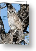 African Wildlife Greeting Cards - Giant Eagle Owl Greeting Card by Tony Camacho