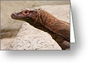 Sly Greeting Cards - Giant Monitor Lizard 2 Greeting Card by Douglas Barnett