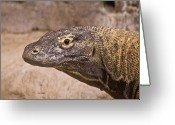 Sly Greeting Cards - Giant Monitor Lizard Greeting Card by Douglas Barnett