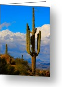 Az Greeting Cards - Giant Saguaro in the Southwest Desert  Greeting Card by James Bo Insogna